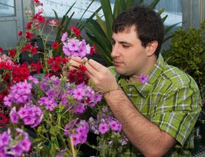 James Mickley examining Phlox drummondii flowers